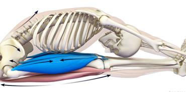 Umetnost predklonov: anatomija in praksa